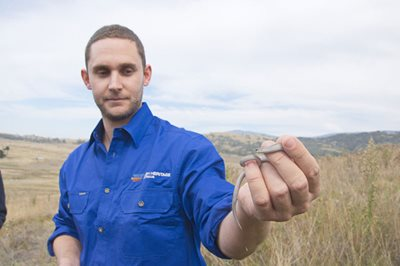 Research partner Brett Howland, with a Striped Legless Lizard. Photo Annette Ruzicka.