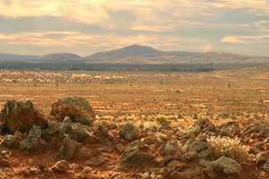 The Boolcoomatta landscape, looking to the Olary Ranges. Photo Wayne Lawler/EcoPix.