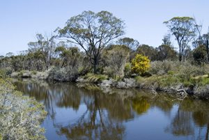 Bushland on the banks of a freshwater pool at Beringa Reserve. Photo: Chinch Gryniewicz.