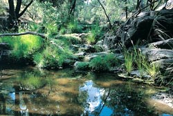 Myall spring on Carnarvon Station Reserve, Queensland