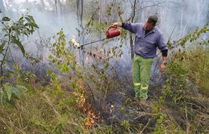 Reserve Manager Paul Hales uses fire to control woody weeds such as Siam and Lantana at Yourka Reserve, Qld.