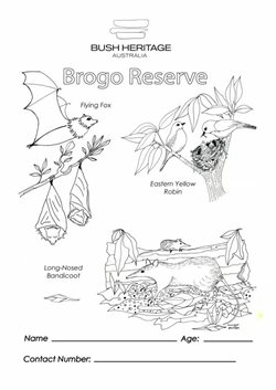 Colouring in sheet for Brogo Reserve.