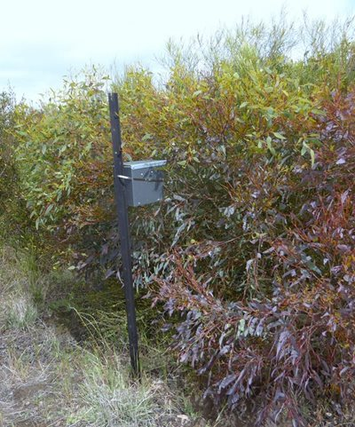An artificial pygmy possum nest box in Monjebup Reserve restoration area. Photo Angela Sanders.