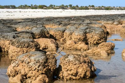 Close up of Stromatolites at Hamelin Pool. Photo Marie Lochman / Lochman Transparencies.