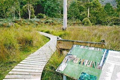 Liffey River Reserve includes an interpretive walk for visitors to complete a self-guided tour of the forest. Photo Wayne Lawler/EcoPix.