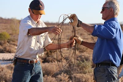 Reserve Manager Kurt Tschirner and volunteer Tony Geyer remove a fence. Photo Nicole Lovelock.