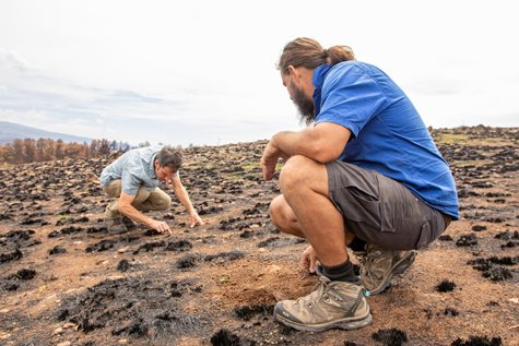 Ecologist Mat Appleby with Reserve manager Phil Palmer examining new growth in burnt grasslands. Photo Amelia Caddy.