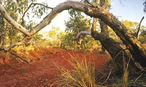 The dry riverbed of the Field River, Ethabuka Reserve, Qld. Photo Wayne Lawler / EcoPix.