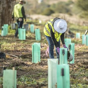 Volunteers tree planting at Scottsdale Reserve, NSW. Photo Annette Ruzicka.