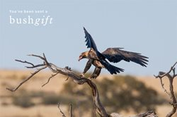 Wedge-tailed Eagle Bushgift card.
